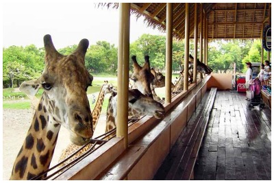 باغ وحش بانکوک |رزرو آنلاین باغ وحش بانکوک با قیمت باور نکردنی|سافاری باغ وحش بانکوک