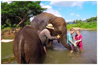 تماشای فیل در جنگل پاتایا | رزرو آنلاین تماشای فیل در جنگل پاتایا با قیمت باور نکردنی