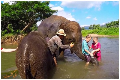 تماشای فیل در جنگل پوکت | رزرو آنلاین تماشای فیل در جنگل پوکت با قیمت باور نکردنی